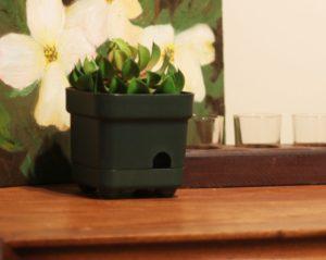 Камера в цветке